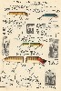 1934 Heddon Lure Catalog showing the Wood Vamps, baby, Standard, Jointed and Musky lures.